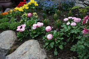 kombinacije niskih, visokih te širokih i vitkih biljaka omogućava optimalnu popunjenost