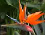 cvjetne biljke