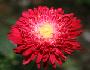 jednogodisnje i dvogodisnje biljke