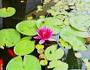 vodene biljke i jezerca