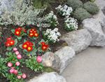 cak i mali kutovi i zakutci mogu dobiti svoje flora stanovnike